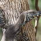 Lace Monitor by triciaoshea