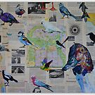 'Bird observation (ornithology) in the Adelaide ParkLands since 1966' by Cat Leonard