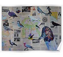 'Bird observation (ornithology) in the Adelaide ParkLands since 1966' Poster