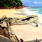 Caribbean Driftwood by Jim Phillips