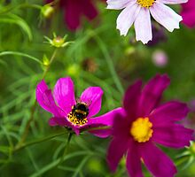 wild flowers and bumble by Marcin Januszewski