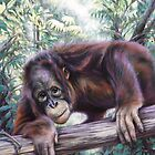 'My forest home - Bornean Orangutan' by steve morvell