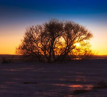 Entangled Sunrise 2974_13 by Ian McGregor