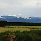 Tranz Alpine Train Journey by Alison Murphy