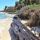 stranded.... by globeboater