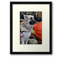 Can I eat this Pumpkin Mom? Framed Print