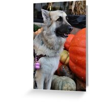 Can I eat this Pumpkin Mom? Greeting Card