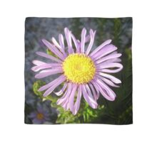 Magenta Aster - A Star of Love and Fidelity Scarf