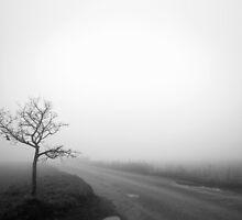 Hitch Hiker - Bury St Edmunds,Suffolk,UK  by Suffolk Photography