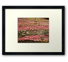 Renfrew Ravine - Scarlet pond Framed Print