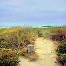 Path to Beach by cjcphotography