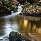 Autumn on Wyming Brook III by John Dunbar