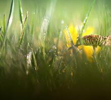Splendour in the grass... by Bob Daalder
