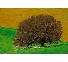mother tree Photographic Print