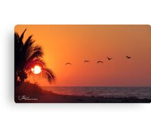 Sunset with pelicans, Manzanillo Bay  Mexico Canvas Print