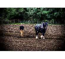 Horse and Spike Harrow Photographic Print