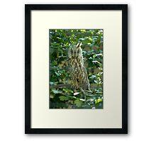 Long Eared Owl Framed Print