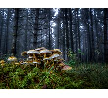 The Rat Pack ~ Wild Mushrooms ~ Photographic Print