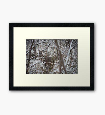 First Snow Doe Framed Print