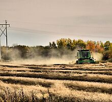 Harvest  by Steve St.Amand
