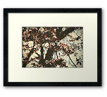 Spring daze... Framed Print