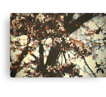 Spring daze... Canvas Print