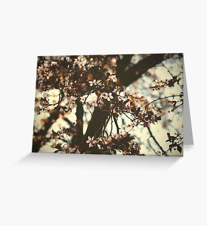 Spring daze... Greeting Card