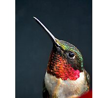 male hummer Photographic Print