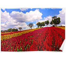 Colorful Plumed Cockscomb Field Vibrant Flowers Poster