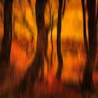 Dusky Memories of Long Forgotten Trees by derekbeattie
