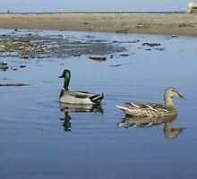 Pair of Ducks by Adrian Wale