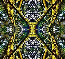 The Butterfly Reflect by MattAtTheWorld