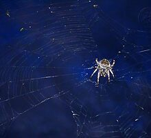 ©BPS Spider On The Wind IIB by OmarHernandez