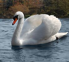 The Lone Swan . by Irene  Burdell
