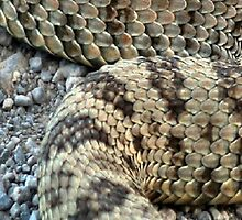 Rattler V by Arla M. Ruggles