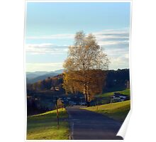 Tree, road and indian summer evening II | landscape photography Poster
