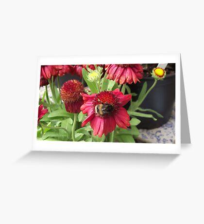 Bumblebee on Flower Greeting Card