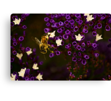 Pollinating  Canvas Print