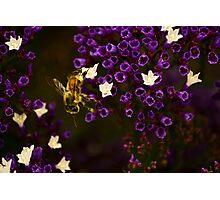 Pollinating  Photographic Print