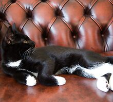 Kaspar relaxes on his Chesterfield sofa by Wolf Kettler