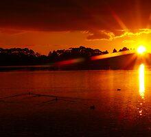 Lake Rotorua in the evening, Hamilton, North Island-New Zealand by yolan
