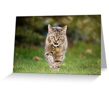 Holly does the catwalk thing Greeting Card