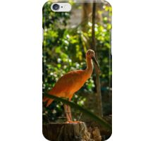 Scarlet Ibis iPhone Case/Skin