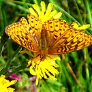 Butterfly Beauty by Christine Ford