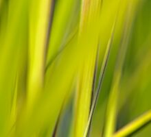 Lime Green Spring Grass by Cora Niele
