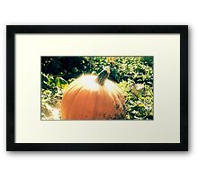 Pumpkin Patch Dreaming Framed Print