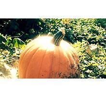 Pumpkin Patch Dreaming Photographic Print