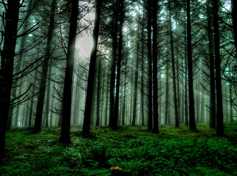 It'sA Green World ~ Fir Trees ~ by Charles & Patricia   Harkins ~ Picture Oregon