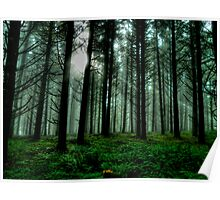 It'sA Green World ~ Fir Trees ~ Poster