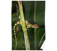 Lizard on Banana Tree Poster